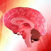 El ácido fólico ayuda a prevenir el ictus en personas con hipertensión