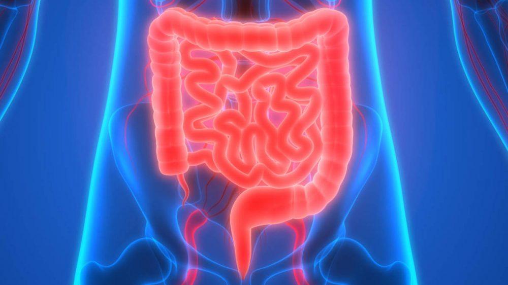 Entrevista a la Dr. Dulcenombre Gómez Garre sobre microbiota intestinal y  actualidad